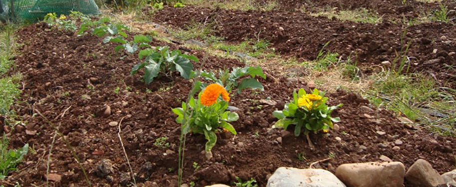 Restore the Soil